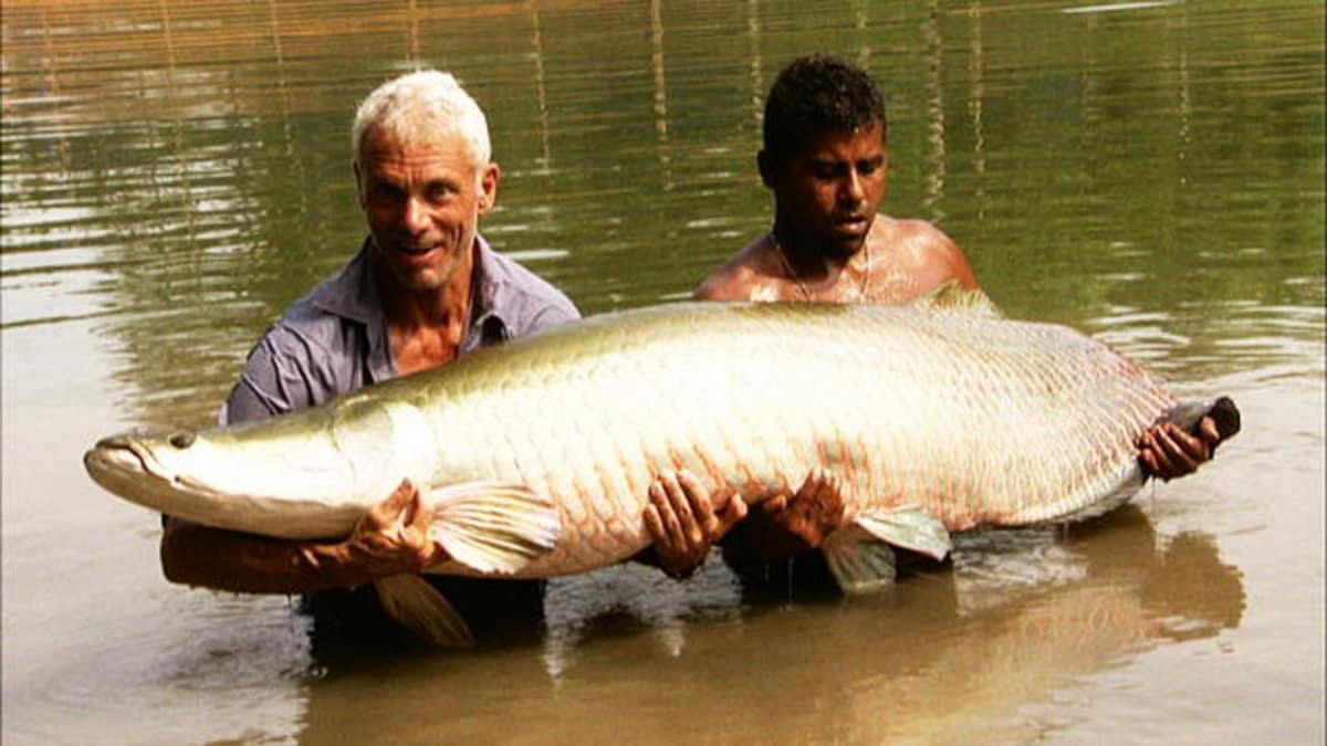 Battling an Arapaima - River Monsters   Animal Planet