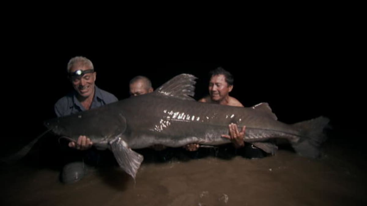 Catch Of A Lifetime Reeling In A Piraiba Beast River Monsters Animal Planet