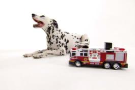 Dogs 101 - Dalmatian