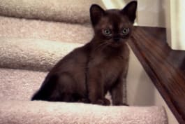 Too Cute! - Baby Kittens Bound Up Stairs
