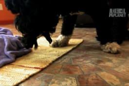 Too Cute! - Mama Wrangles Her Pups
