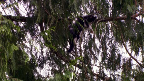 Treetop Cat Rescue | Watch Full Episodes & More! - Animal Planet