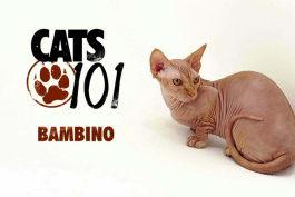 Cats 101 - Bambino