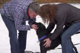 Pit Bulls & Parolees - Finding a Forever Home and SNOW in New Hampshire