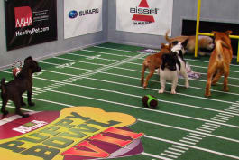 Puppy Bowl - Inside The Bowl: Best Naps