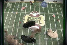 Puppy Bowl - Inside The Bowl: The First Puppy Bowl