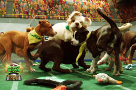 Puppy Bowl - Inside The Bowl: Henry vs. Falcor