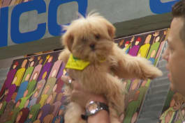 Puppy Bowl - Rory Gets the First Touchdown in Puppy Bowl XIII