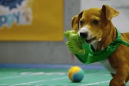 Puppy Bowl - Daisy Starts a Team Ruff Comeback