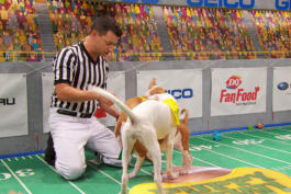 Puppy Bowl - Who Stole the Ref's Whistle?