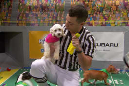 Puppy Bowl - Scoring with the Ref's Flag