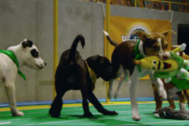 Puppy Bowl - Team Ruff Claws Back
