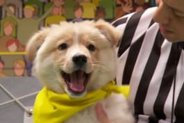 Puppy Bowl - Blitz Blasts onto the Scoreboard