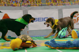 Puppy Bowl - Fourth Quarter Puppy Play