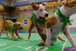 Puppy Bowl - Team Ruff's Streak Comes to an End