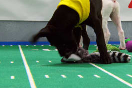 Puppy Bowl - Sully and Maybell
