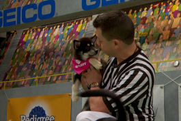 Puppy Bowl - Alexander Hamilpup: The Little Pup with the Big Ideas