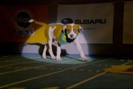 Puppy Bowl - Stormy: Team Ruff's Furry Hurricane