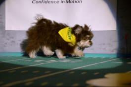 Puppy Bowl - Slippers: Team Fluff's Tiny Wonder
