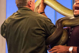 Animal Nation with Anthony Anderson - Bellamy Young; Steve Byrne; Snakes