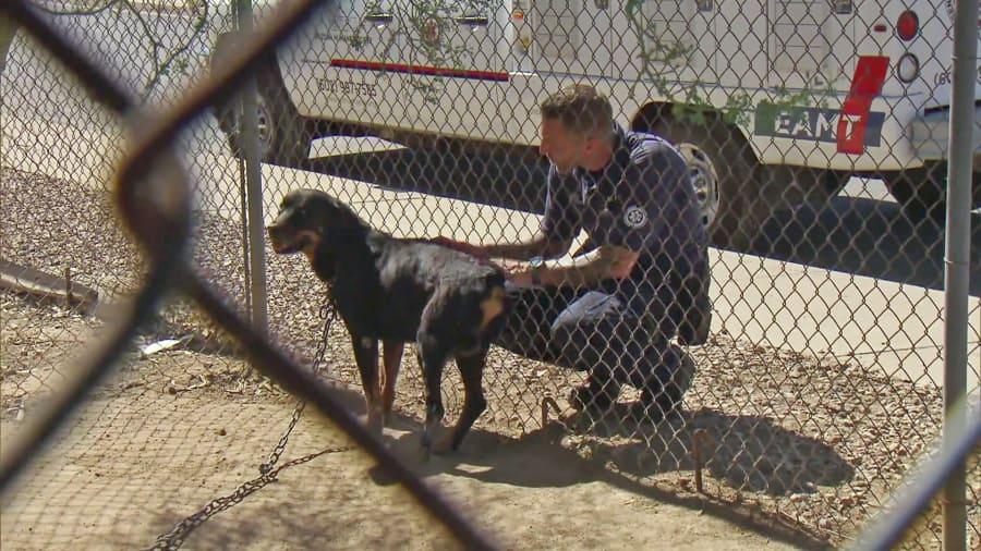 Animal Cops Phoenix - Chain Break