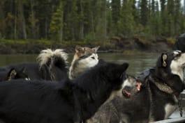 The Last Alaskans - Winter's Dawn