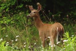 North Woods Law - New Hampshire - Manhunt