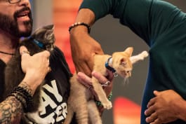 Animal Nation with Anthony Anderson - Keesha Sharp; Fred Willard; Jackson Galaxy