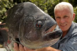 River Monsters - Amazon Apocalypse