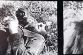 Roar: The Most Dangerous Movie Ever Made - Roar: The Most Dangerous Movie Ever Made