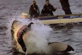 Shark Week - Shark Week's Impossible Shot