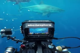 Shark Week - The Biggest Great White Ever Filmed