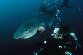 Shark Week - Bull Shark: World's Deadliest Shark