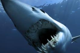 Shark Week - Baddest Bites