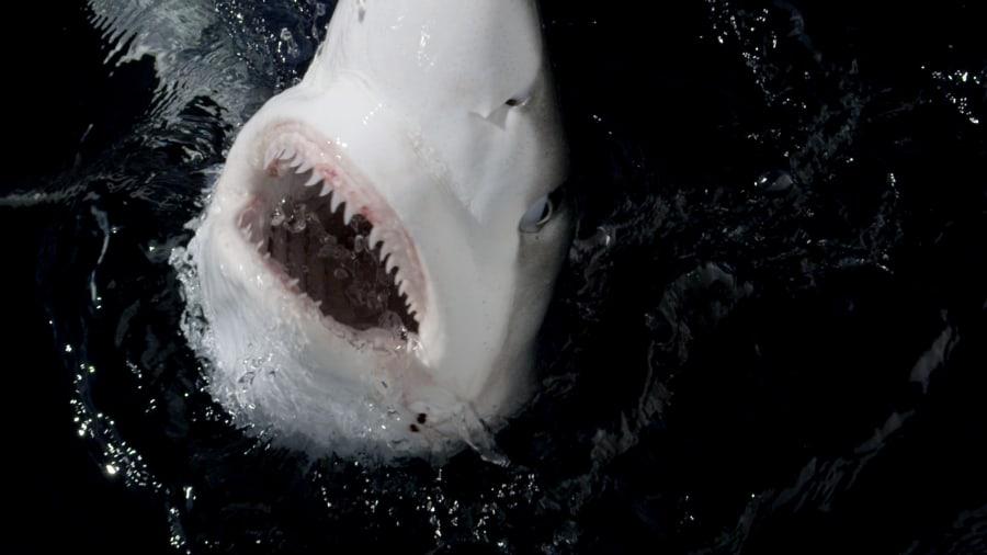 Shark Week - Shark Vortex