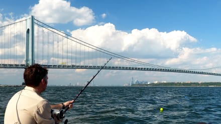 Shark Week - Sharks and the City: New York
