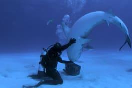 Shark Week - Shark Week Firsts