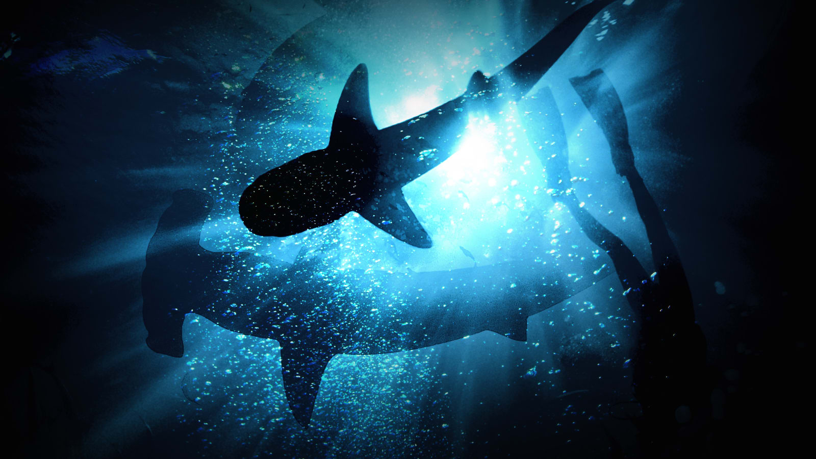 African Shark Safari
