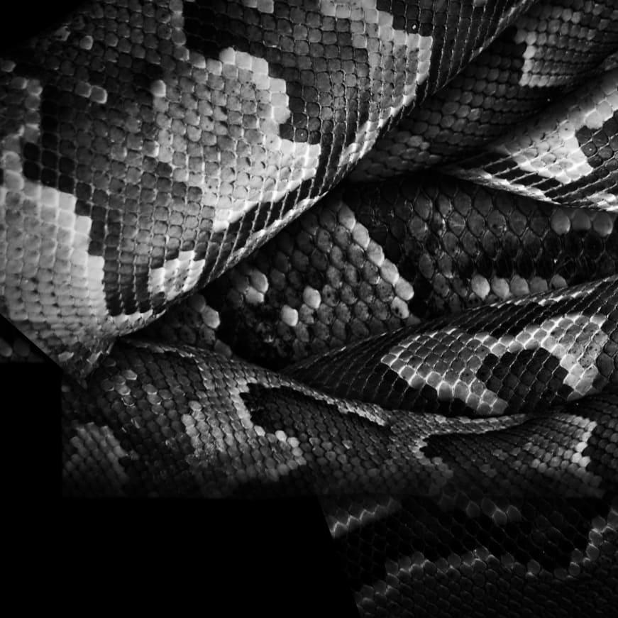 Man-Eating Python