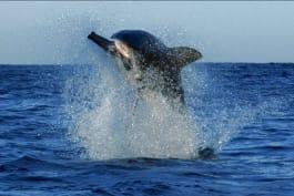 Shark Week - Dancing with Sharks