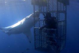 Shark Week - Caged & Afraid