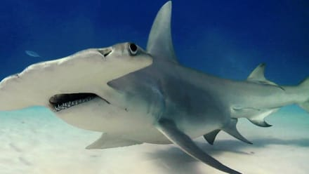 Shark Week - Sharkopedia Crash Course