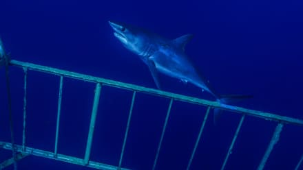 Shark Week - The Lost Cage