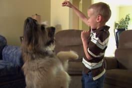 Dogs 101 - Briard, Canaan Dog, Dogo Argentino, Japanese Chin, Wonder Dog, Clumber Span