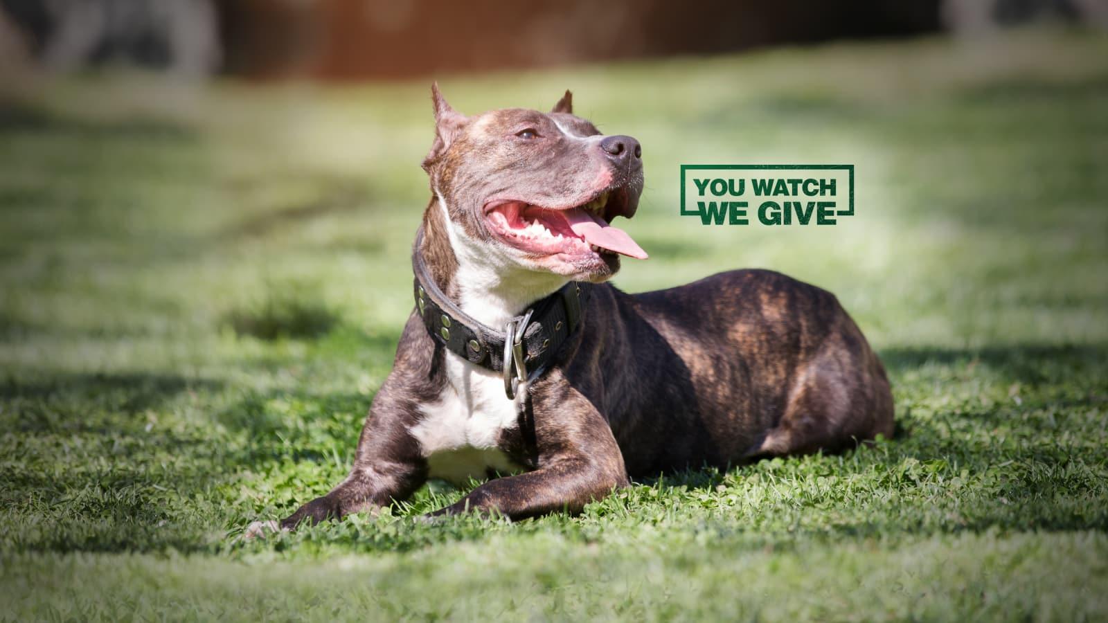 Pit Bulls & Parolees: You Watch. We Give.