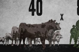 War Stories - Forty by Eight