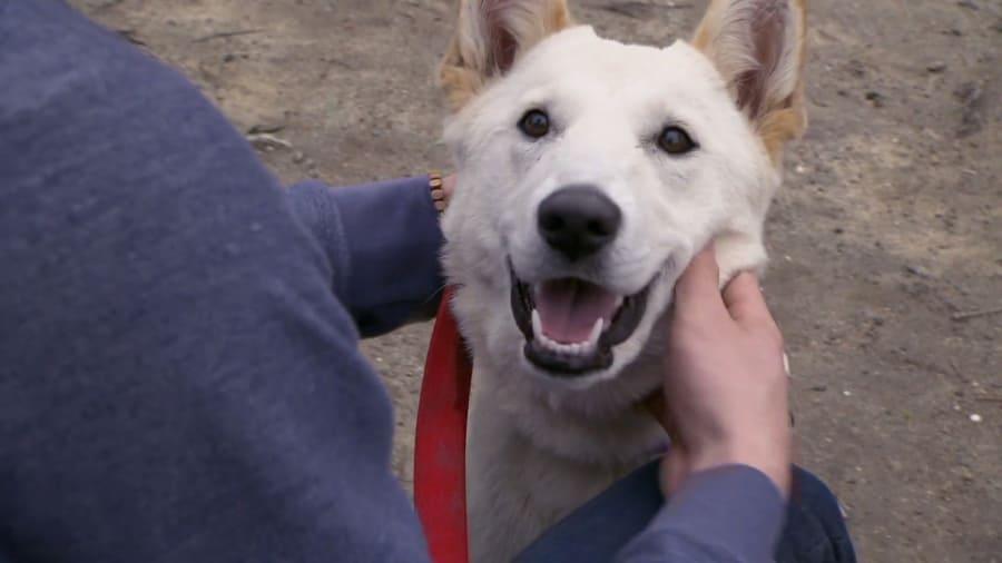 Rescue Dog to Super Dog - Heaven Scent