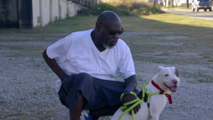 Pit Bulls & Parolees - Tip of the Iceberg