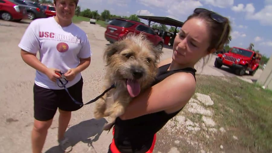 Surviving Harvey: Animals After the Storm - Surviving Harvey: Animals After the Storm