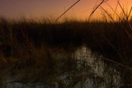 Sunrise Earth - Everglades River of Grass